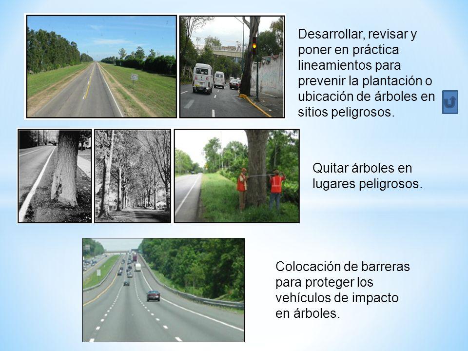 Desarrollar, revisar y poner en práctica lineamientos para prevenir la plantación o ubicación de árboles en sitios peligrosos.