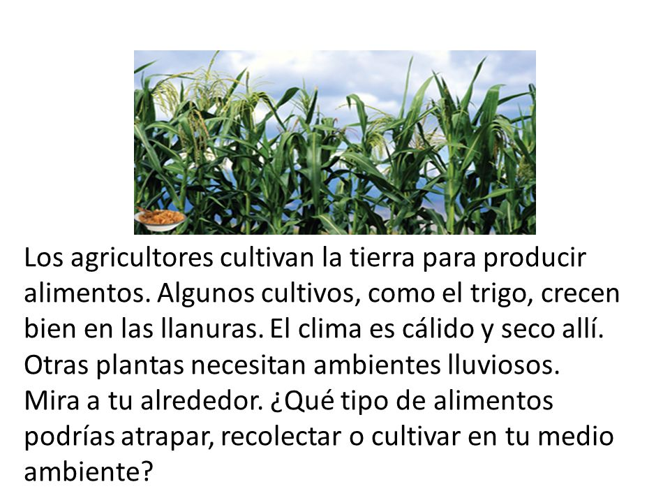 Los agricultores cultivan la tierra para producir alimentos
