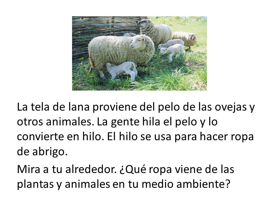 La tela de lana proviene del pelo de las ovejas y otros animales