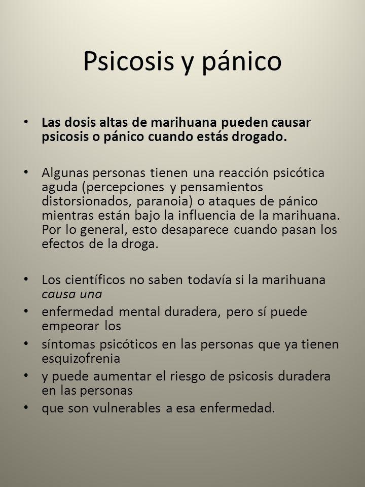 Psicosis y pánico Las dosis altas de marihuana pueden causar psicosis o pánico cuando estás drogado.