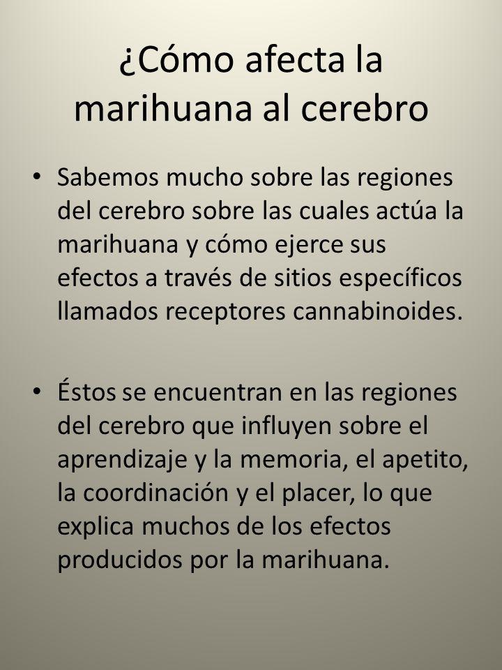 ¿Cómo afecta la marihuana al cerebro