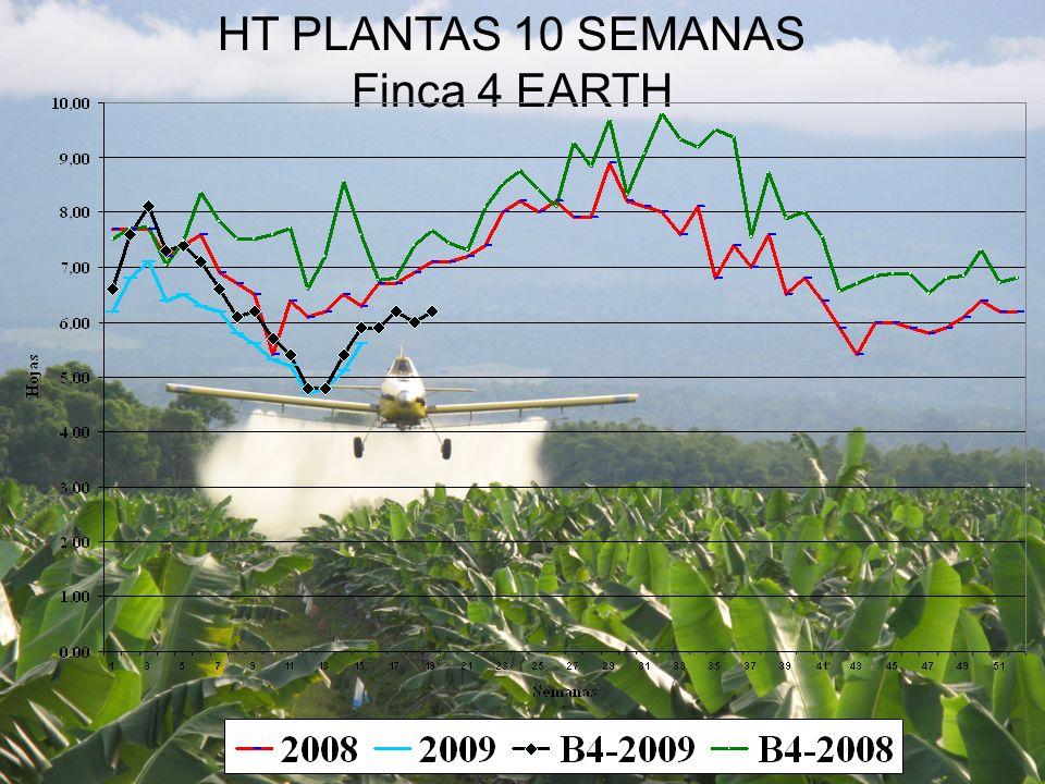 HT PLANTAS 10 SEMANAS Finca 4 EARTH