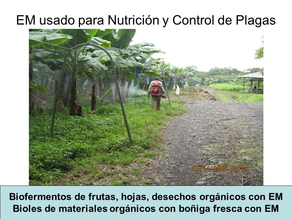 EM usado para Nutrición y Control de Plagas