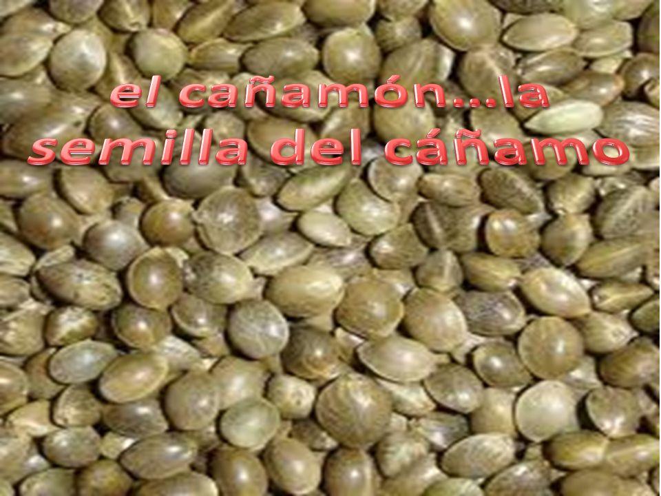 el cañamón…la semilla del cáñamo