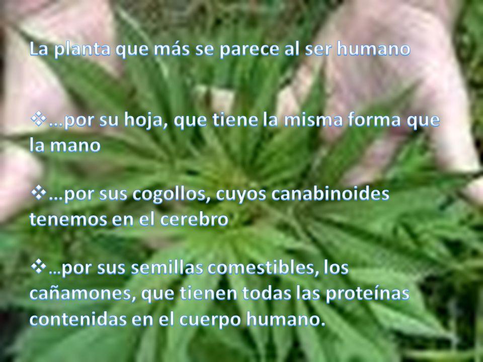 La planta que más se parece al ser humano