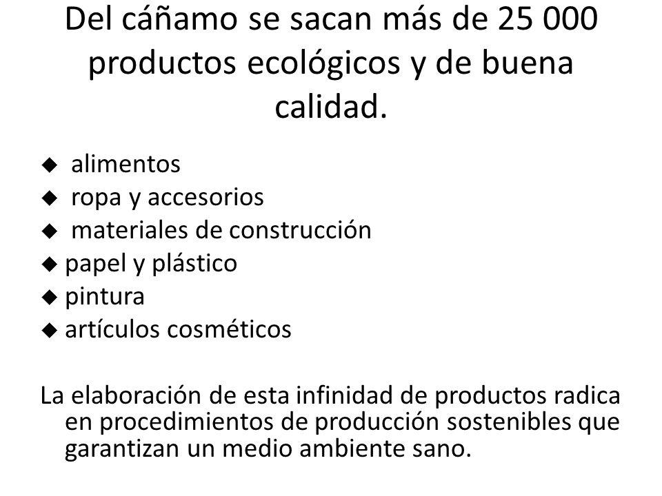 Del cáñamo se sacan más de 25 000 productos ecológicos y de buena calidad.