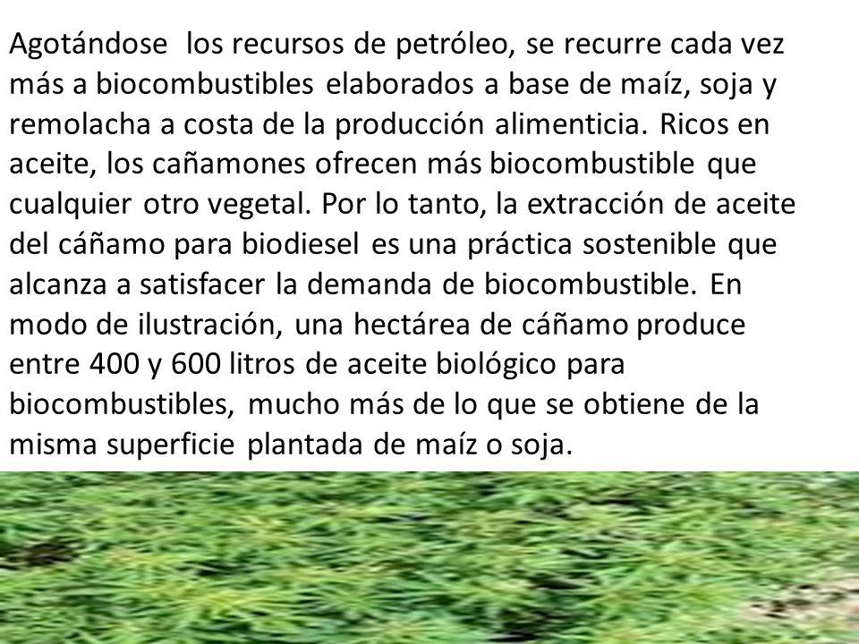 Agotándose los recursos de petróleo, se recurre cada vez más a biocombustibles elaborados a base de maíz, soja y remolacha a costa de la producción alimenticia.