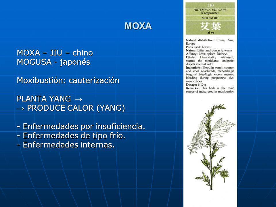 MOXA MOXA – JIU – chino MOGUSA - japonés Moxibustión: cauterización