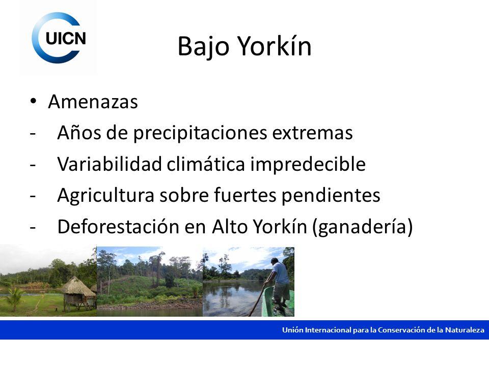 Bajo Yorkín Amenazas Años de precipitaciones extremas