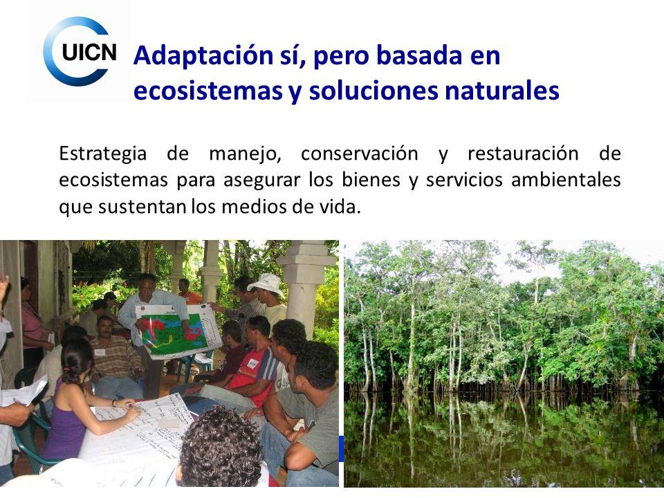 Adaptación sí, pero basada en ecosistemas y soluciones naturales