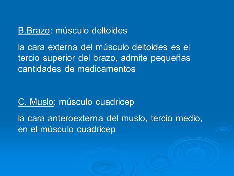 B.Brazo: músculo deltoides