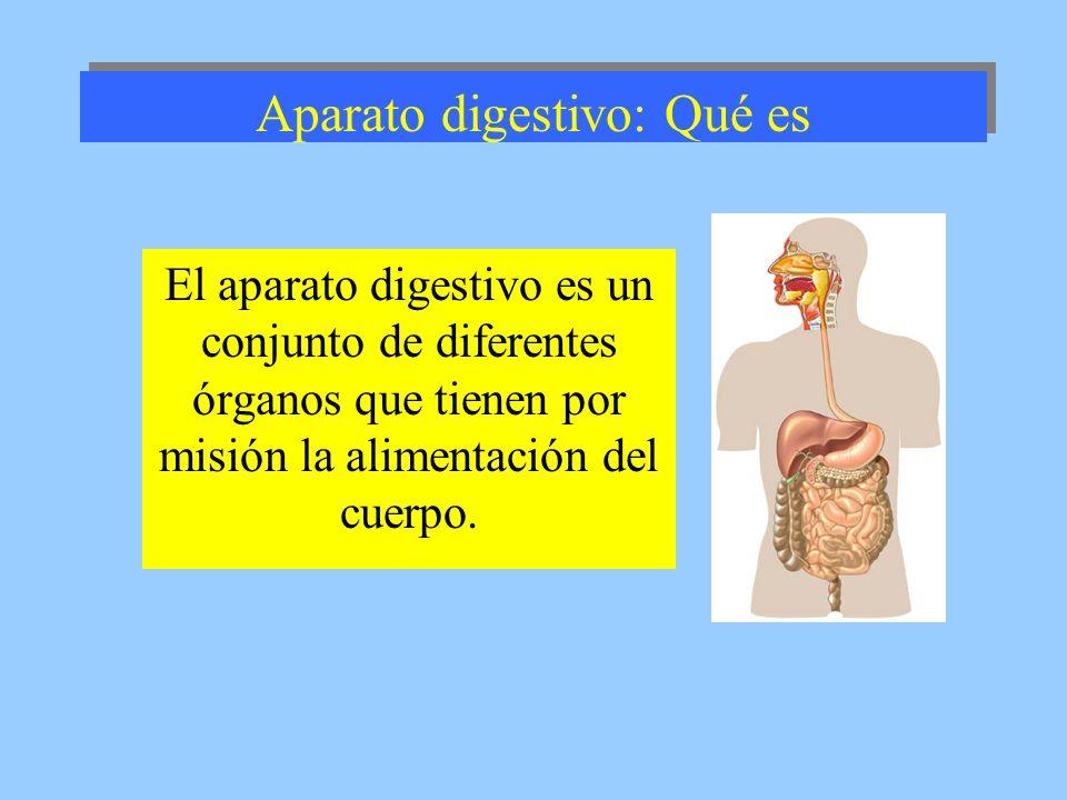 Aparato digestivo: Qué es