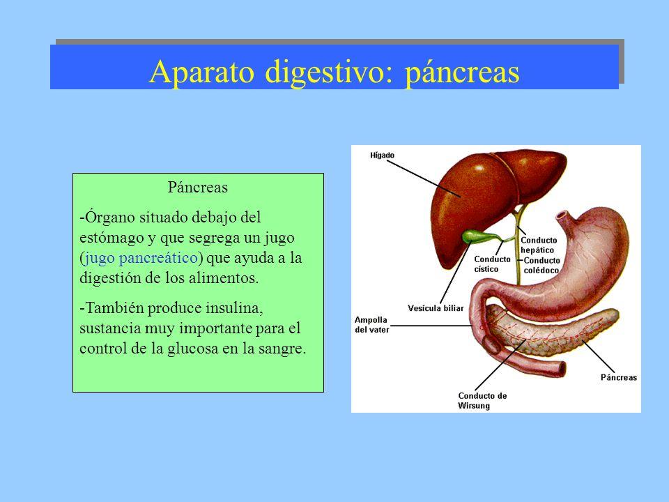 Aparato digestivo: páncreas