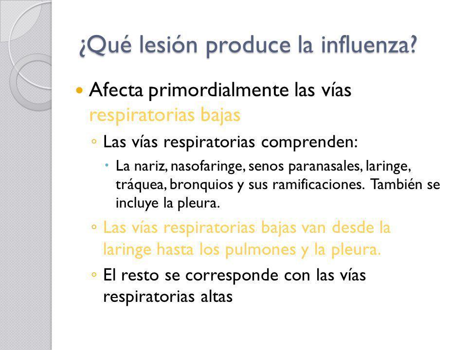 ¿Qué lesión produce la influenza