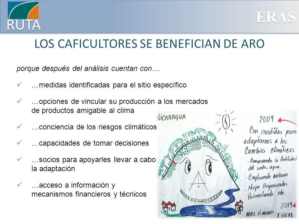 LOS CAFICULTORES SE BENEFICIAN DE ARO