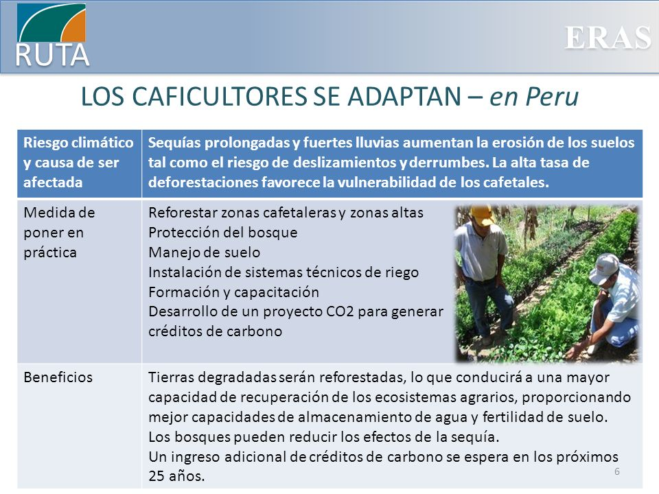 LOS CAFICULTORES SE ADAPTAN – en Peru