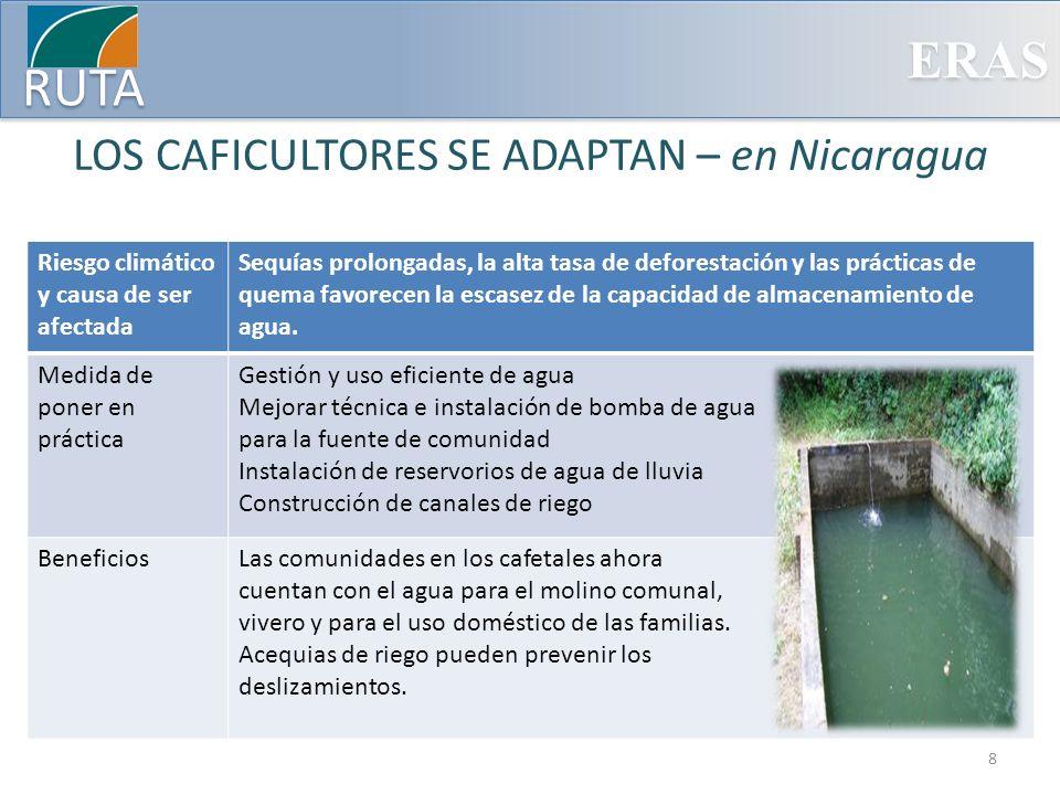 LOS CAFICULTORES SE ADAPTAN – en Nicaragua