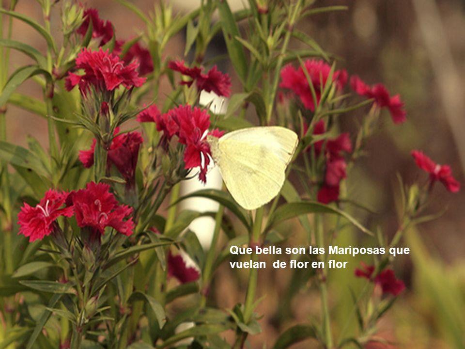 Que bella son las Mariposas que vuelan de flor en flor