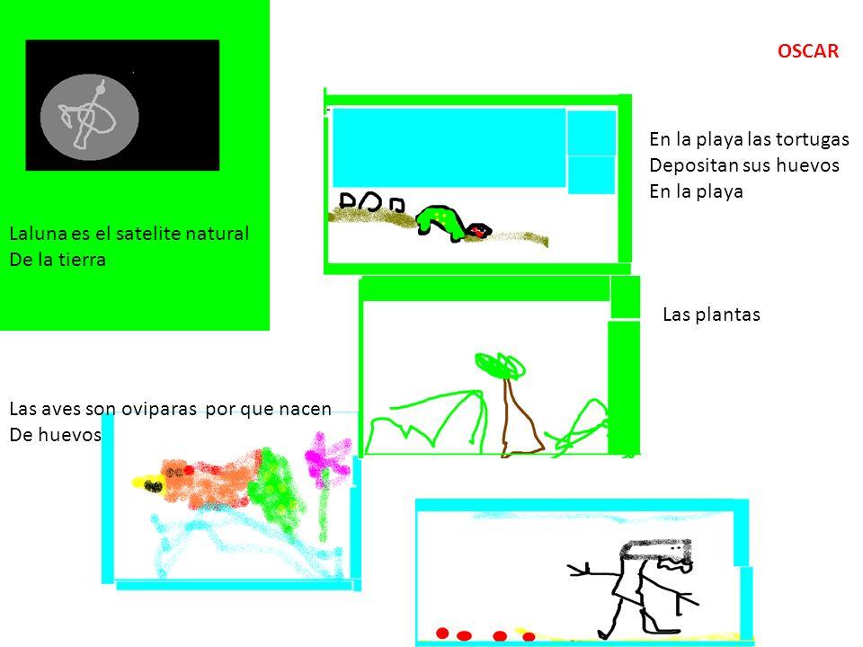 OSCAR En la playa las tortugas. Depositan sus huevos. En la playa. Laluna es el satelite natural.
