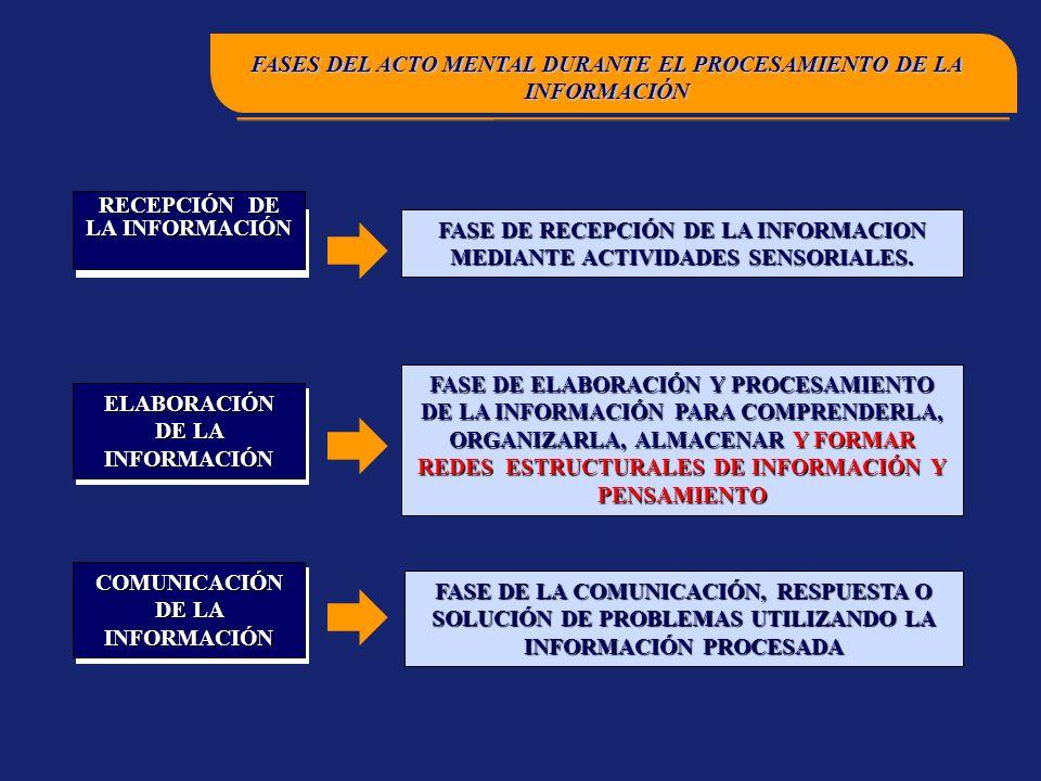 FASES DEL ACTO MENTAL DURANTE EL PROCESAMIENTO DE LA INFORMACIÓN
