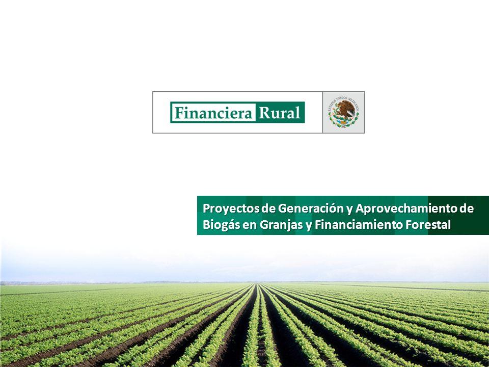 Proyectos de Generación y Aprovechamiento de Biogás en Granjas y Financiamiento Forestal