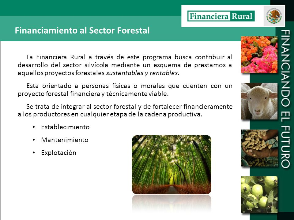 Financiamiento al Sector Forestal