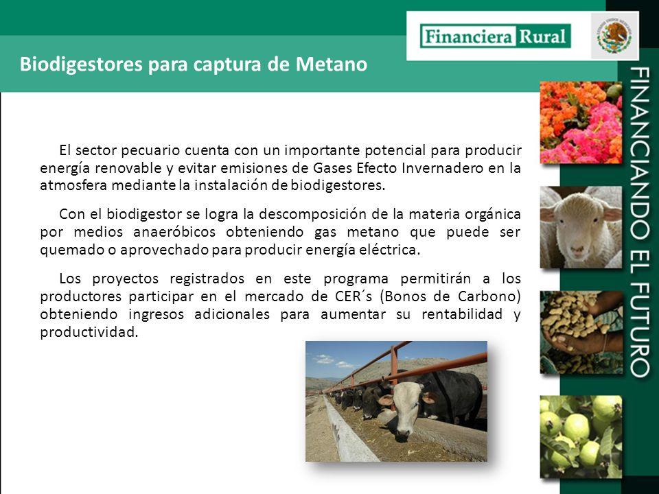 Biodigestores para captura de Metano