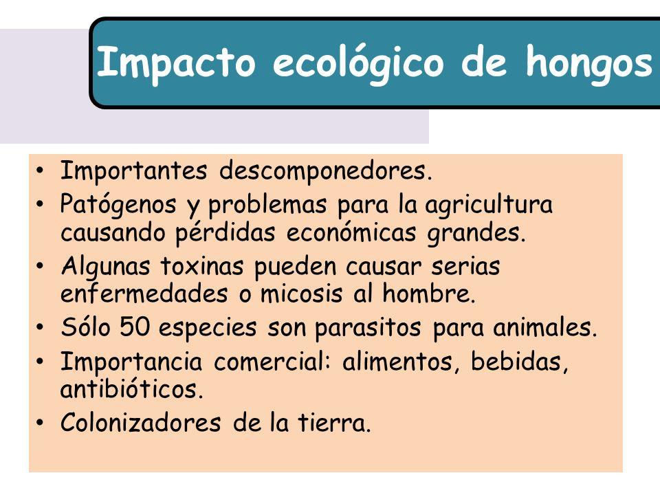 Impacto ecológico de hongos