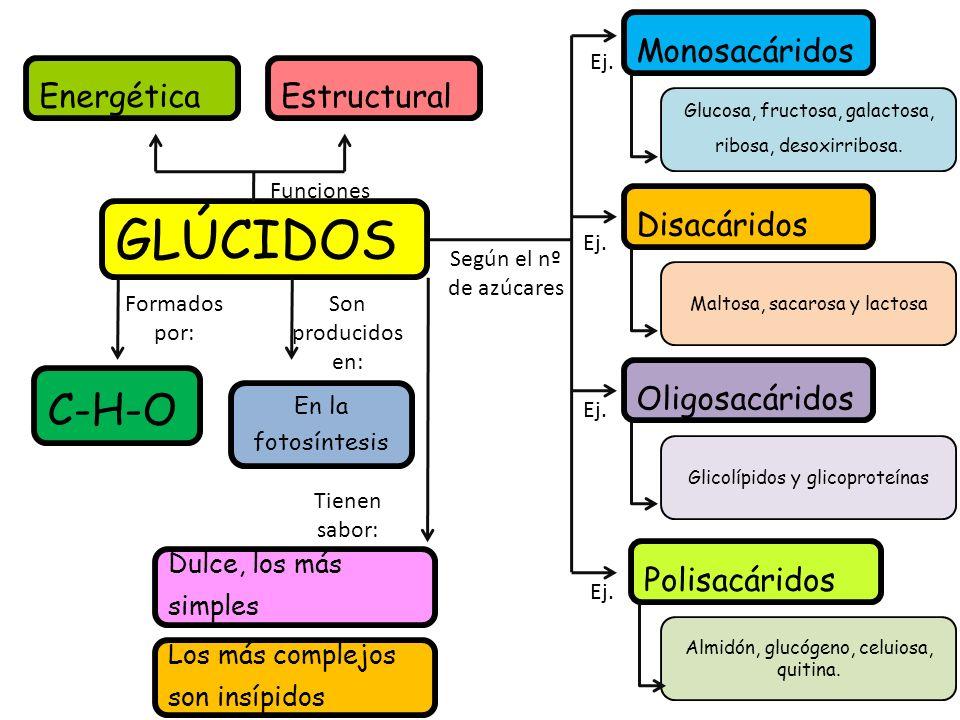 GLÚCIDOS C-H-O Monosacáridos Energética Estructural Disacáridos