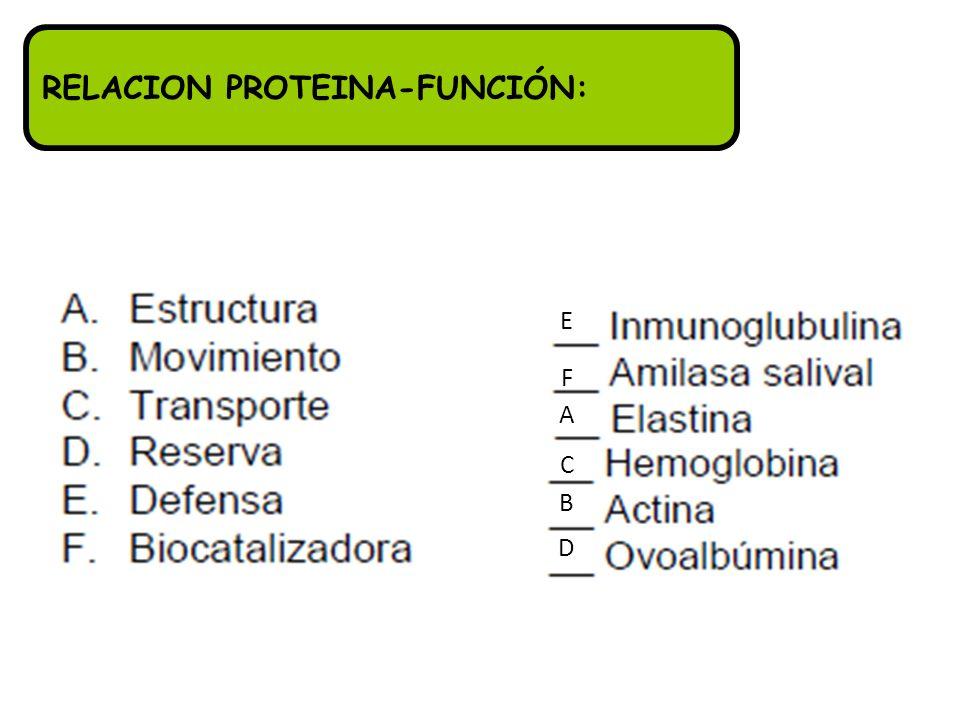 RELACION PROTEINA-FUNCIÓN: