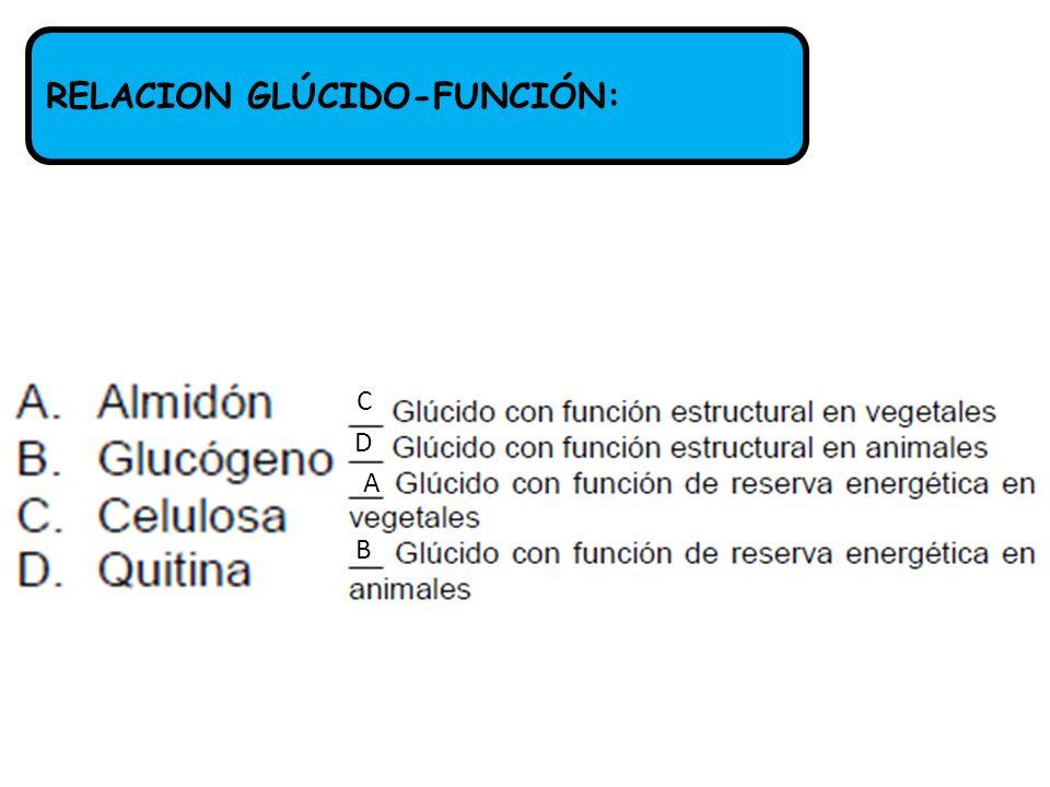 RELACION GLÚCIDO-FUNCIÓN: