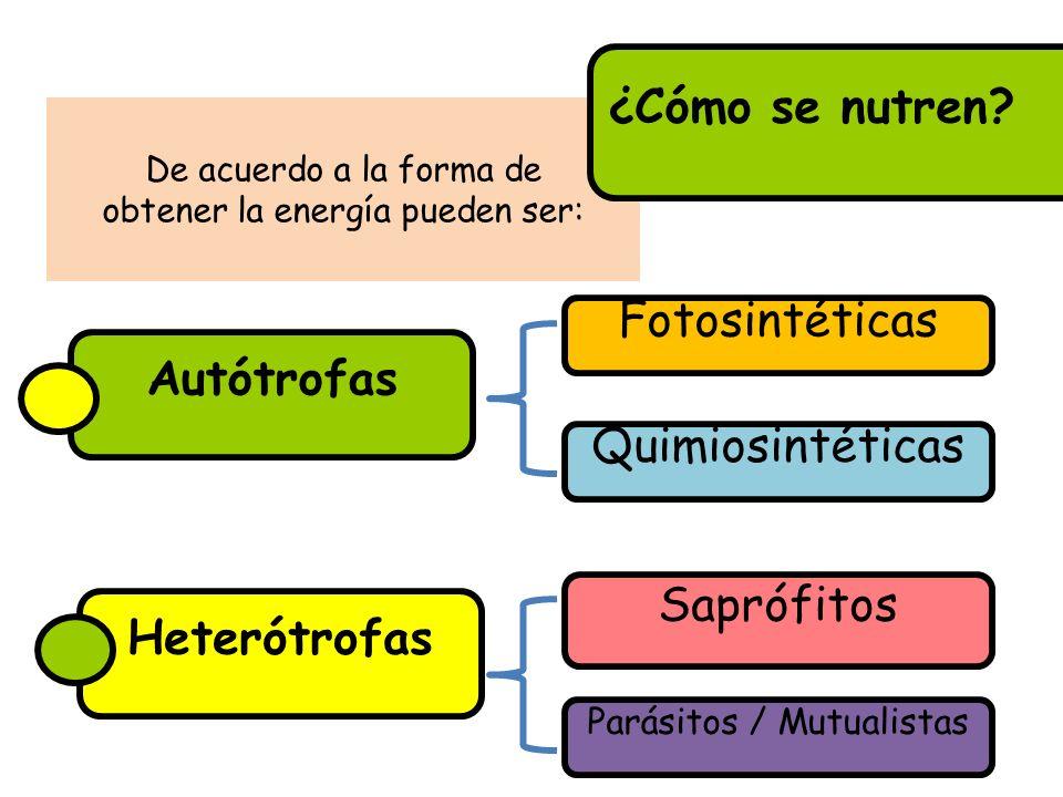 Autótrofas Heterótrofas