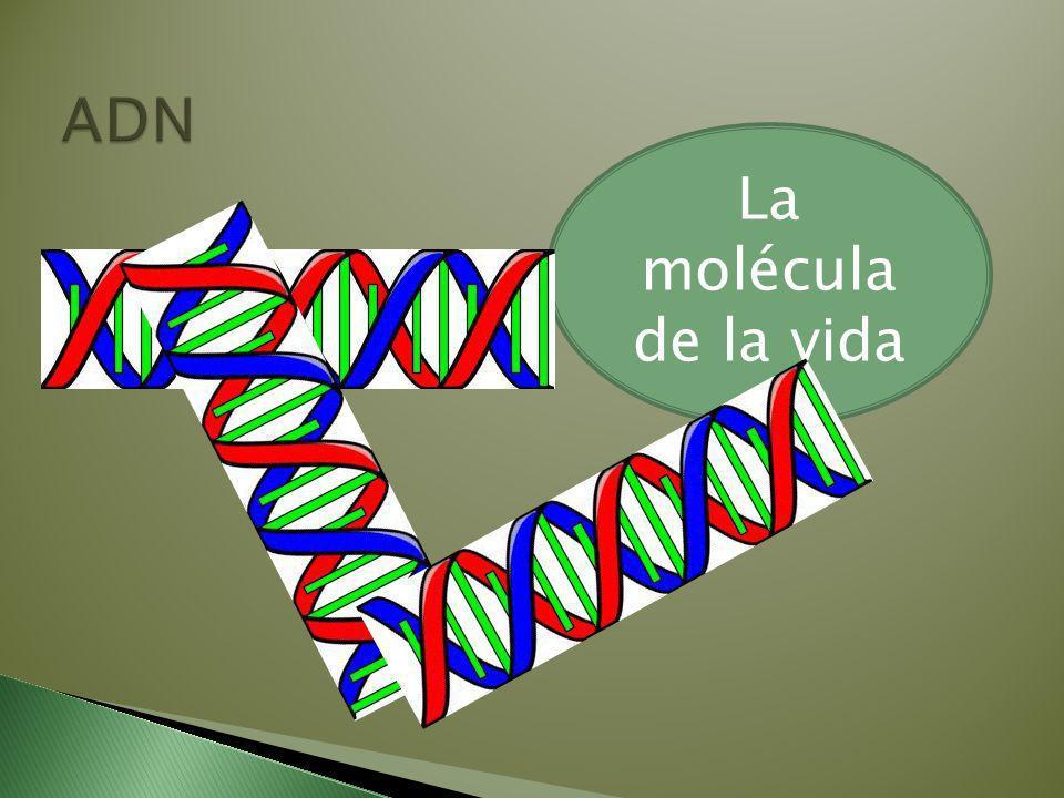 ADN La molécula de la vida