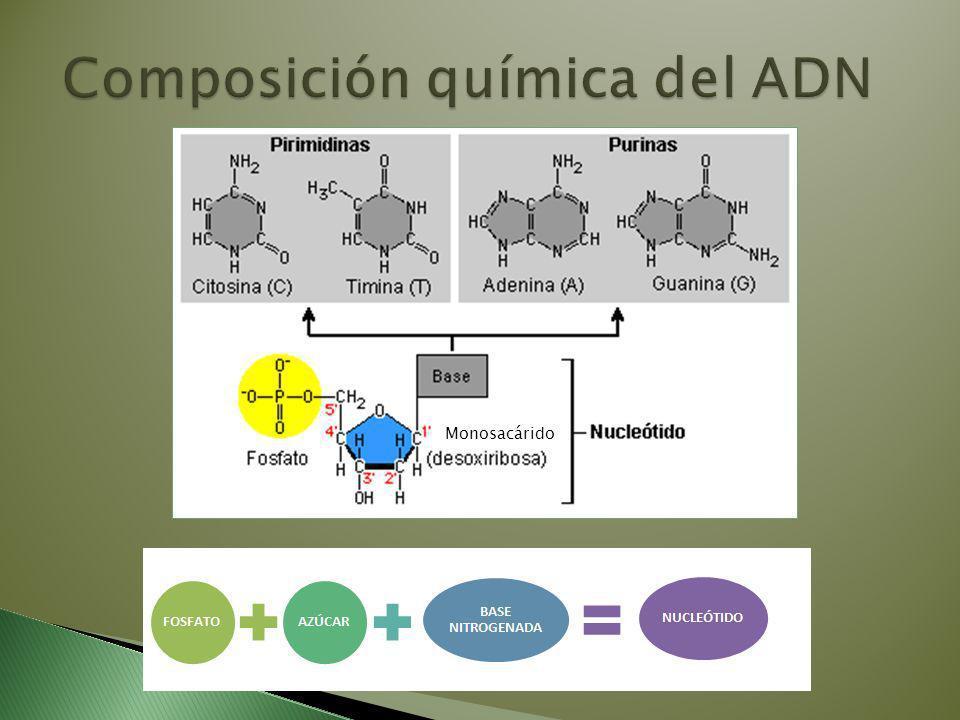 Composición química del ADN