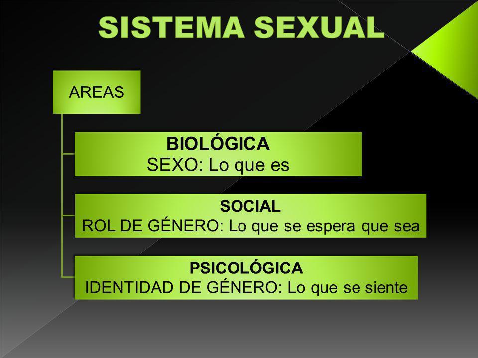 SISTEMA SEXUAL BIOLÓGICA SEXO: Lo que es AREAS SOCIAL