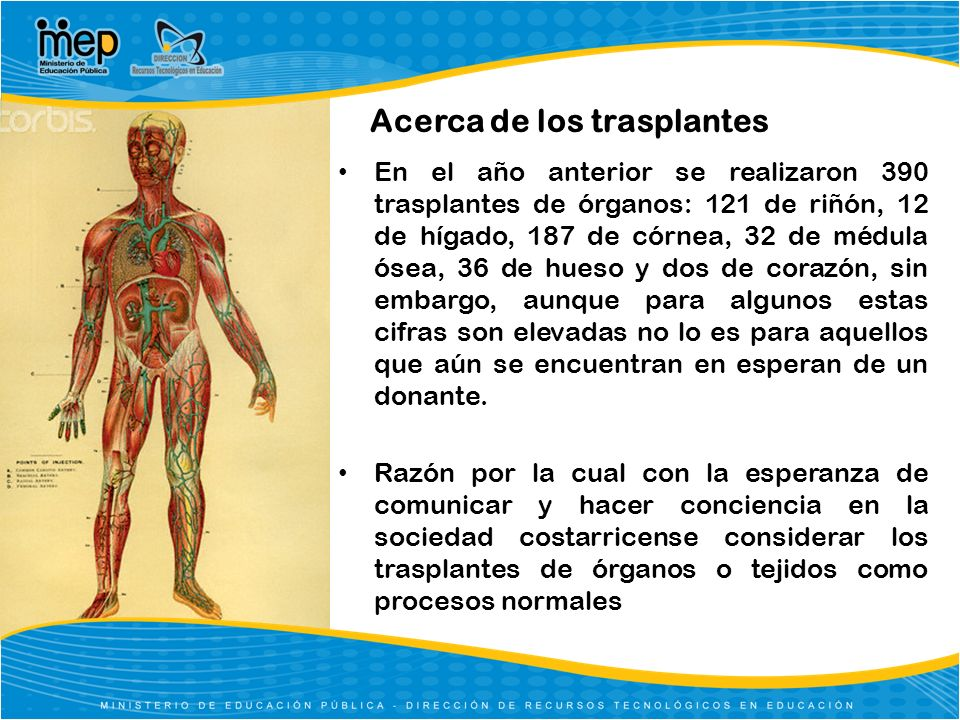 Acerca de los trasplantes