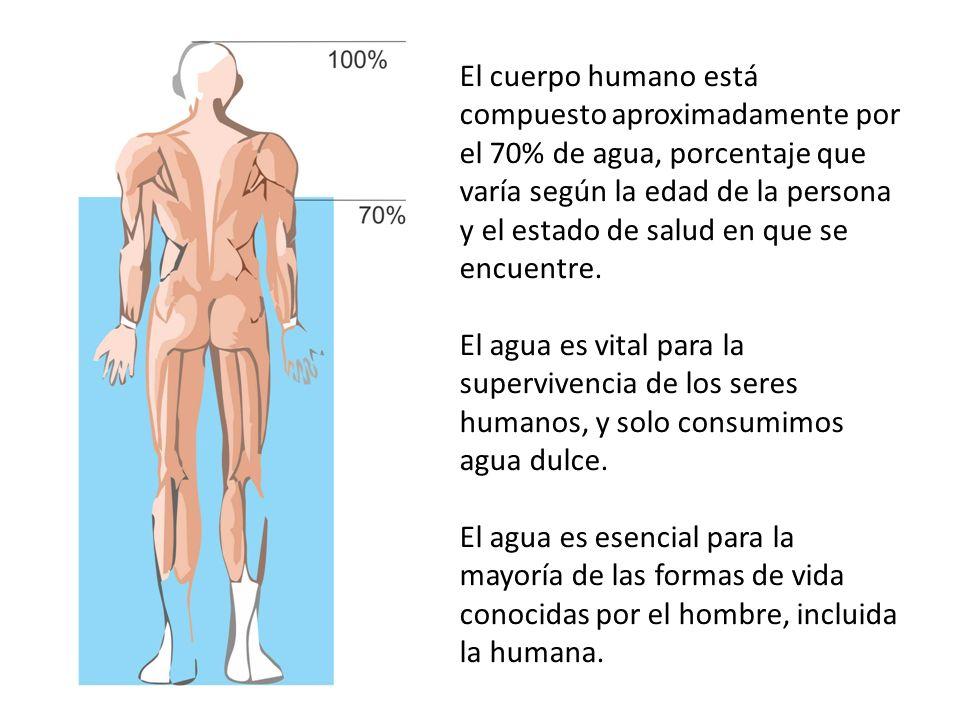 El cuerpo humano está compuesto aproximadamente por el 70% de agua, porcentaje que varía según la edad de la persona y el estado de salud en que se encuentre.