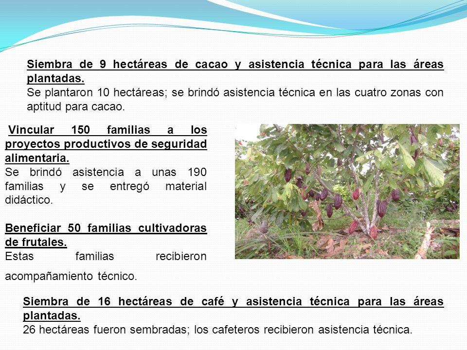Siembra de 9 hectáreas de cacao y asistencia técnica para las áreas plantadas.