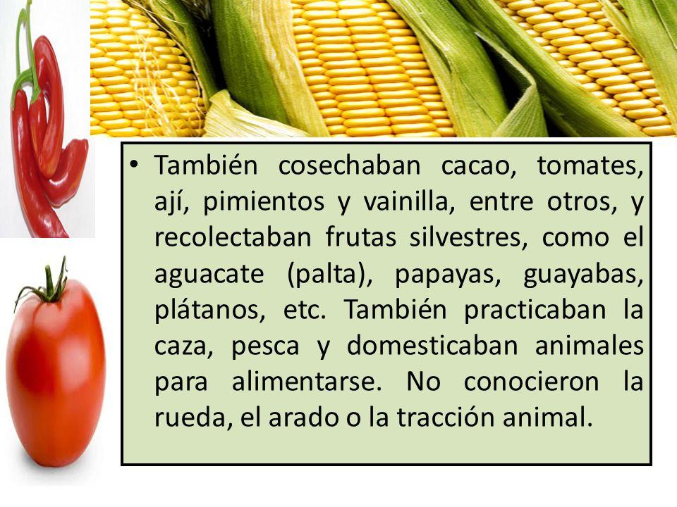 También cosechaban cacao, tomates, ají, pimientos y vainilla, entre otros, y recolectaban frutas silvestres, como el aguacate (palta), papayas, guayabas, plátanos, etc.