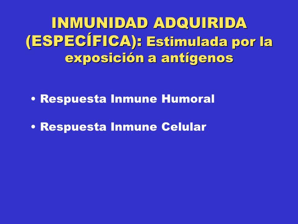 INMUNIDAD ADQUIRIDA (ESPECÍFICA): Estimulada por la exposición a antígenos