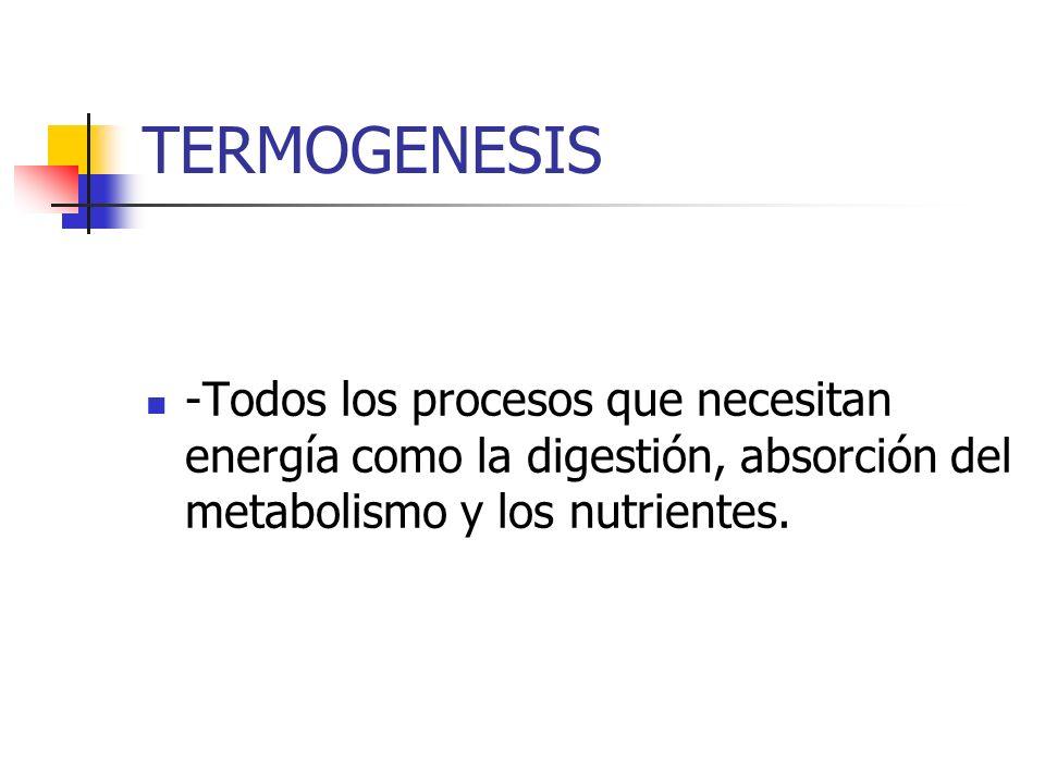 TERMOGENESIS -Todos los procesos que necesitan energía como la digestión, absorción del metabolismo y los nutrientes.