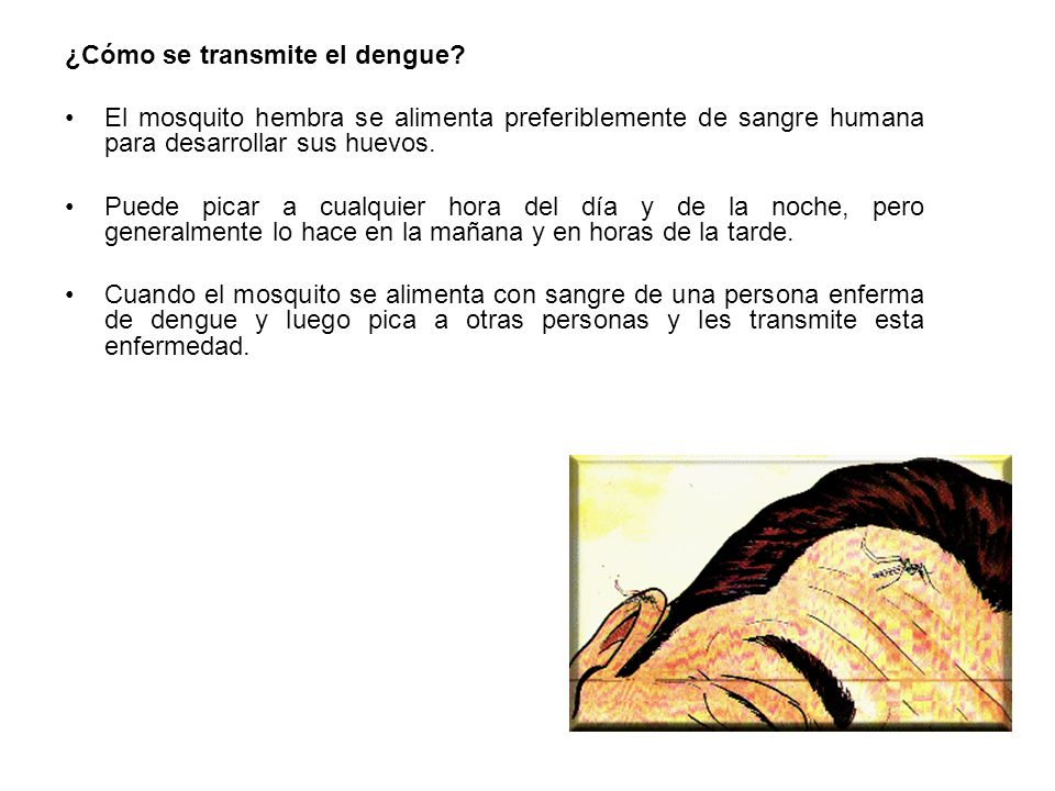 ¿Cómo se transmite el dengue