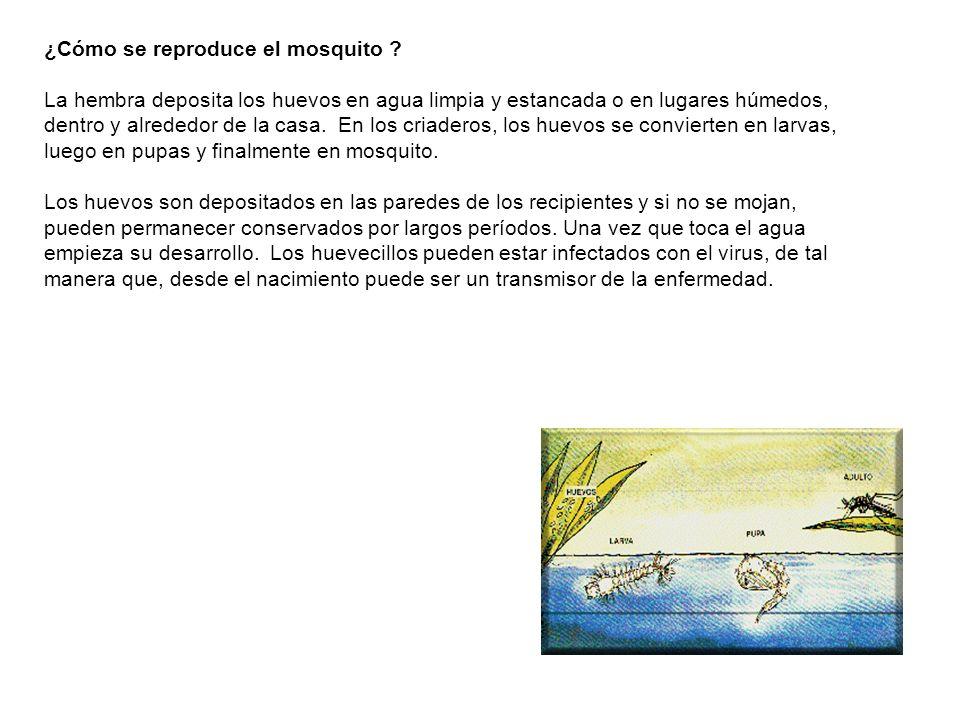 ¿Cómo se reproduce el mosquito