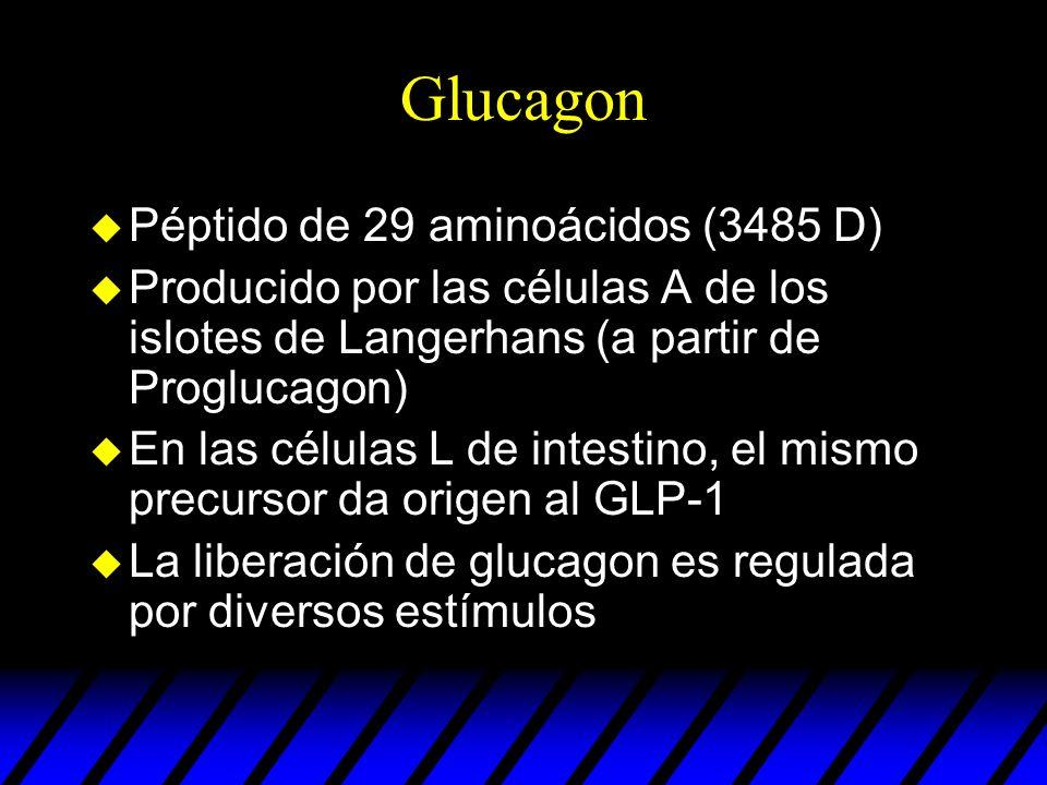 Glucagon Péptido de 29 aminoácidos (3485 D)
