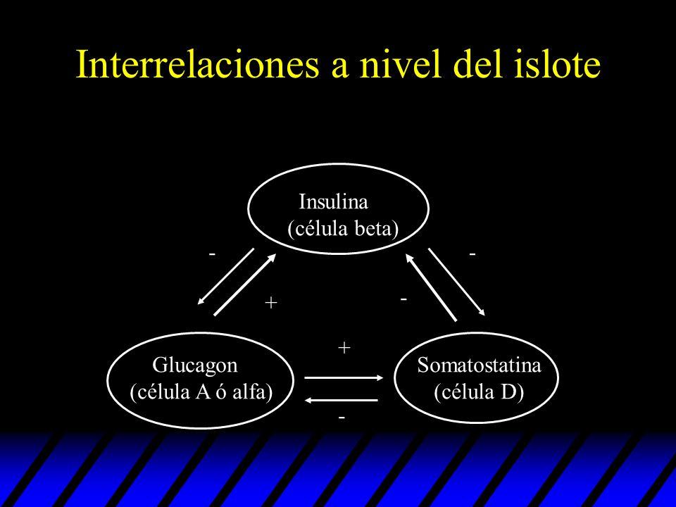 Interrelaciones a nivel del islote