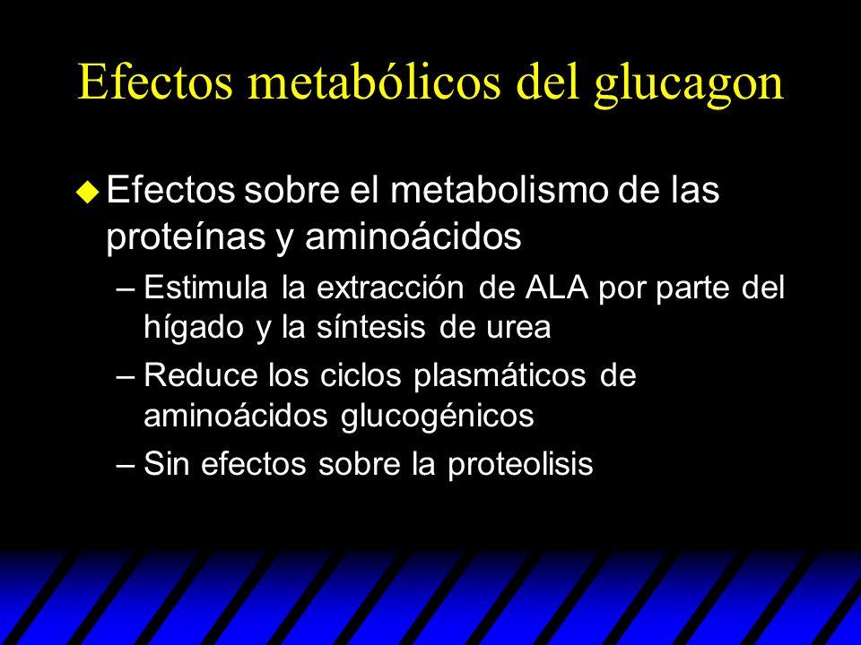 Efectos metabólicos del glucagon