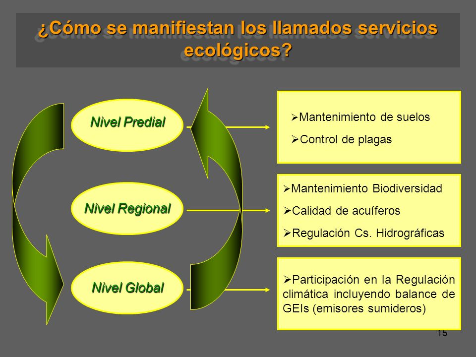 ¿Cómo se manifiestan los llamados servicios ecológicos