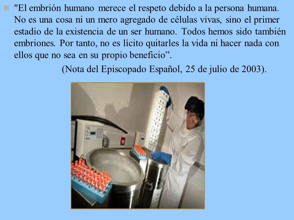 El embrión humano merece el respeto debido a la persona humana