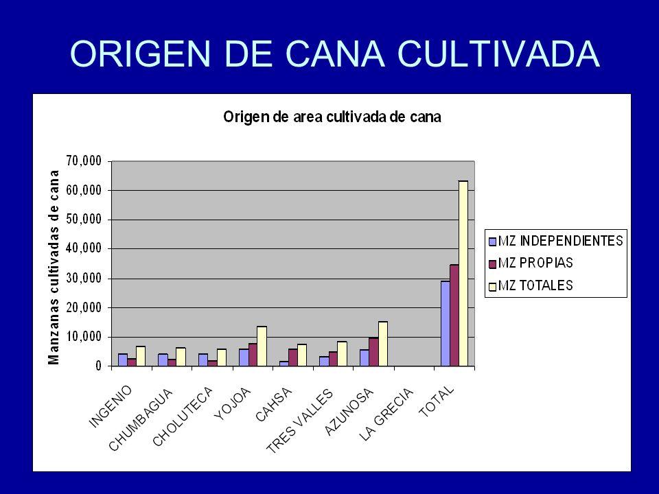 ORIGEN DE CANA CULTIVADA