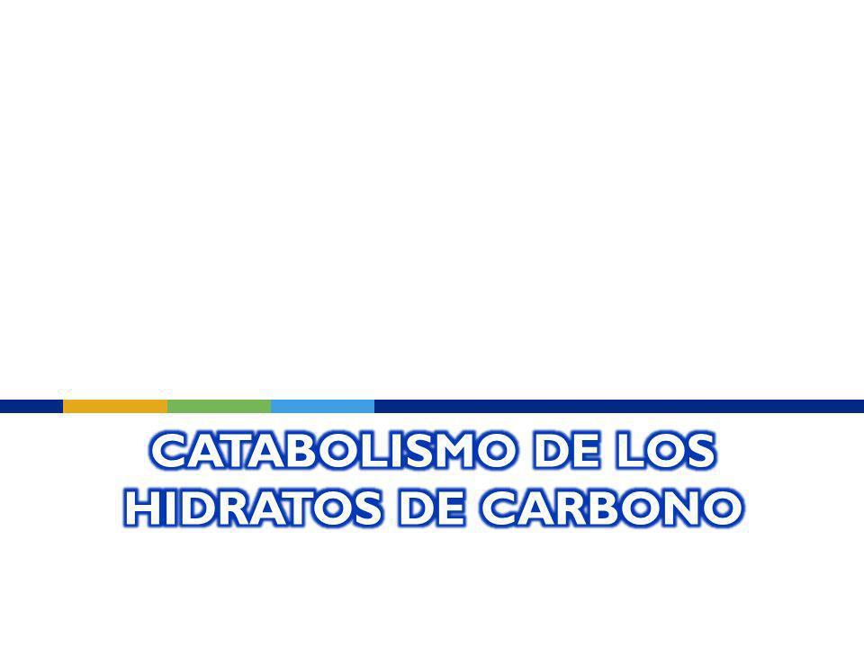 Catabolismo de los Hidratos de carbono